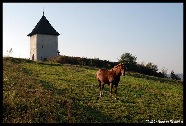 Кінь на тлі замку