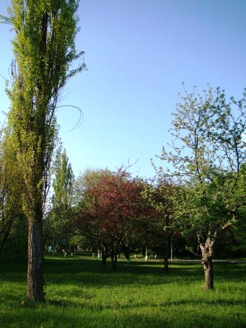 Яблуневий сад