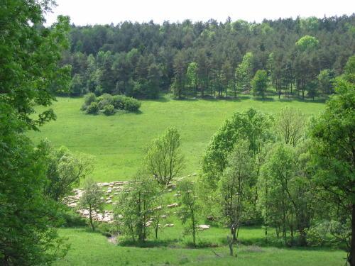 [2003..2006 р.] Вівці - господарі долини