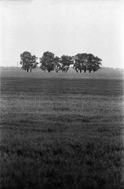 1983 р. Краєвид по дорозі від с.Марківці до с.Петрівське