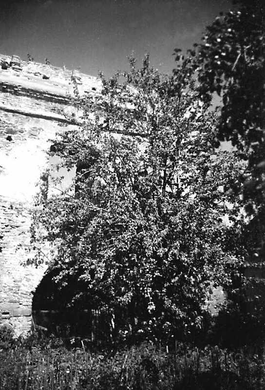 1991 р. Фрагмент південно-західного фасаду. Вигляд з південного заходу