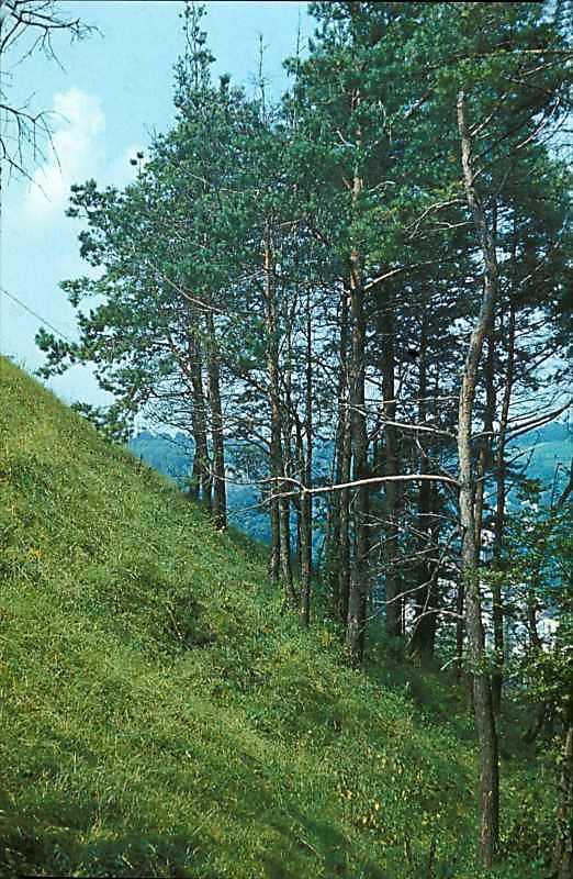 1977 р. Західний схил Замкової гори