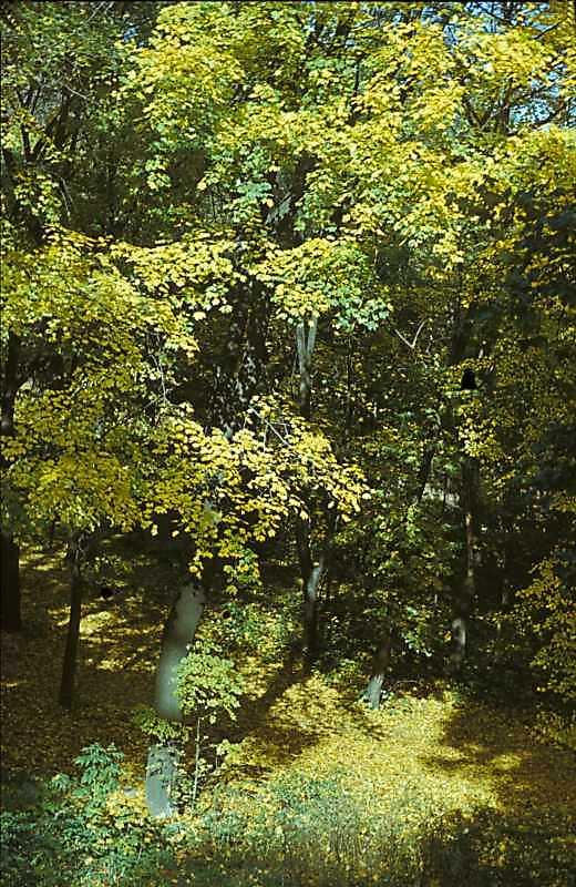 1978 р. Вид парку