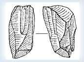 Стоянка палеолітична Куличівка